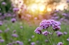 In Georgetown, SC, Rose Cox and Lyric Bowers Learned About Purple And White Verbena